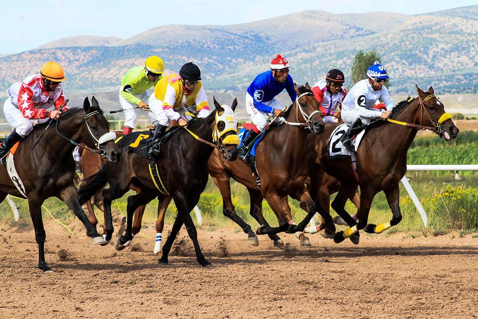 Horses, Racing, Wyoming, Downs, Track, Betting, Jockeys