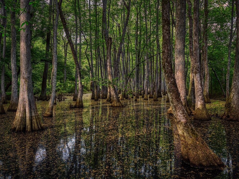 Mississippi, América, Pantano, Forestales, Árboles