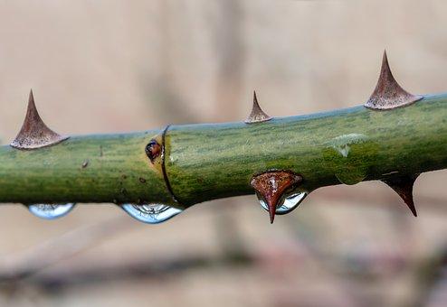 Espinhos, Gota De Água