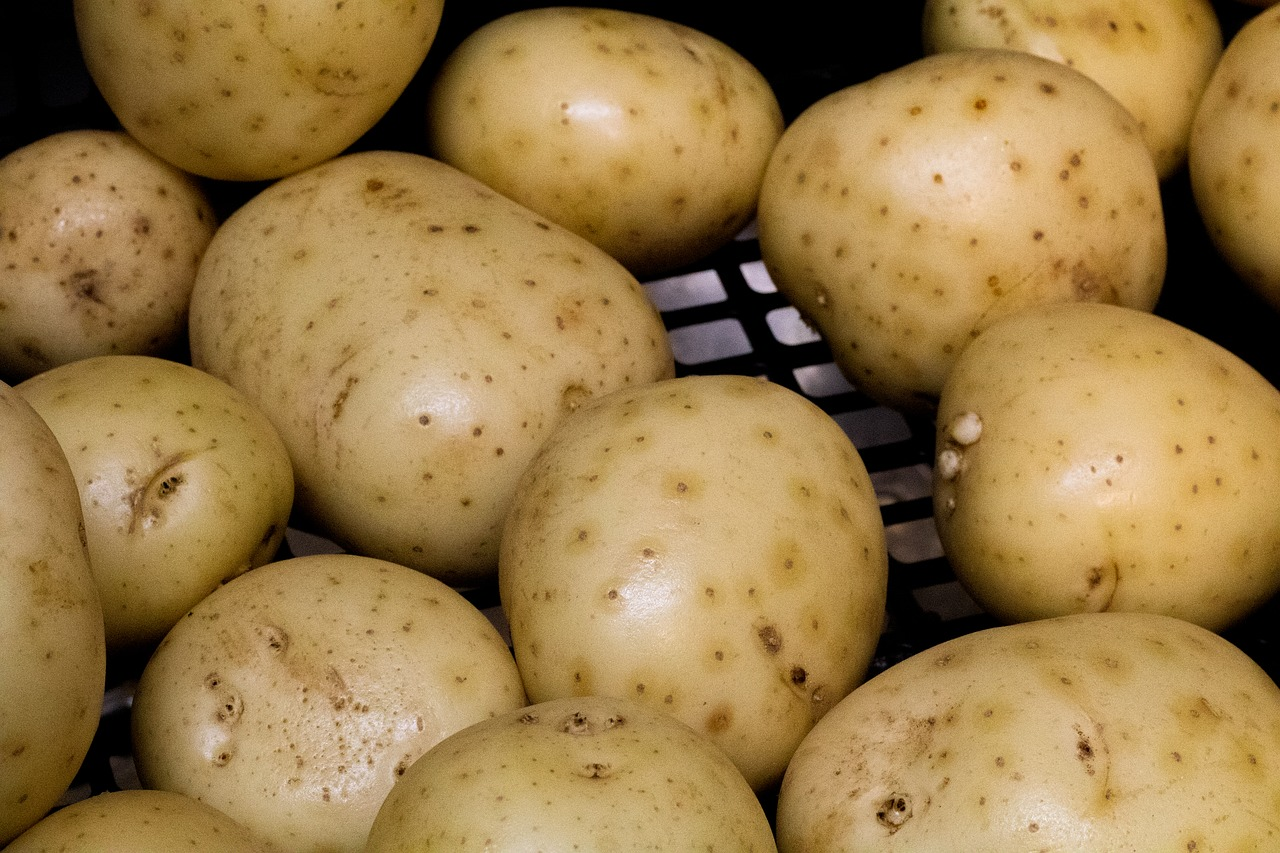 腐った, ジャガイモ, 分解, 損, 虫, Putrid, 芋根, 終了しました, 食品, 成分, 腐