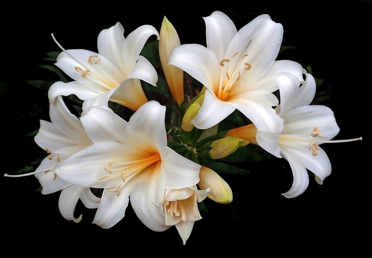 рассказывать картинки с цветами лилии белые дочка просто обожает