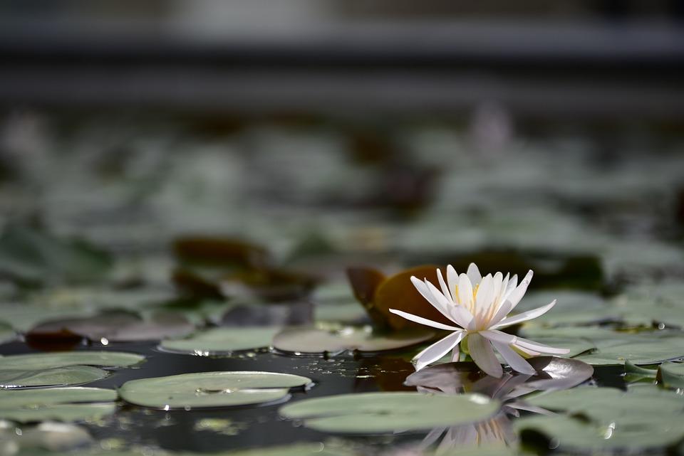 ���, ����, �, ��, ����, 庭, Flower, 水