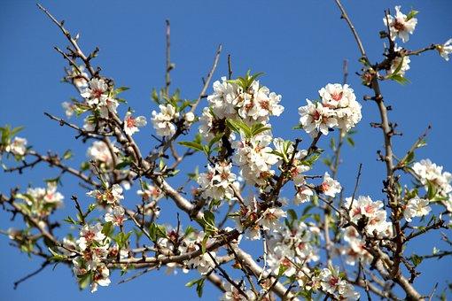 Auf zur Mandelblüte nach Mallorca - rosa