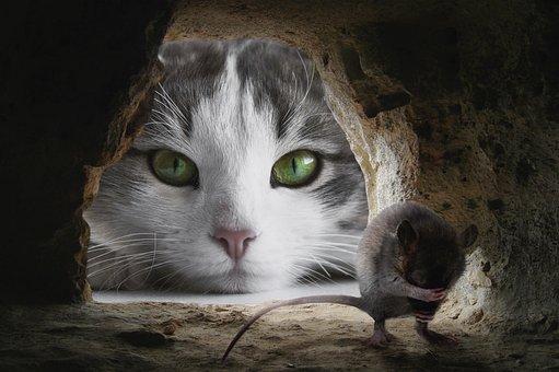 Kucing, Mouse, Berburu, Lucu, Hewan
