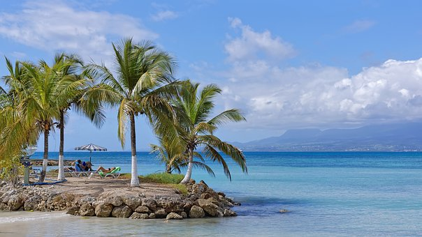 Plage, Cocotier, Mer, Guadeloupe