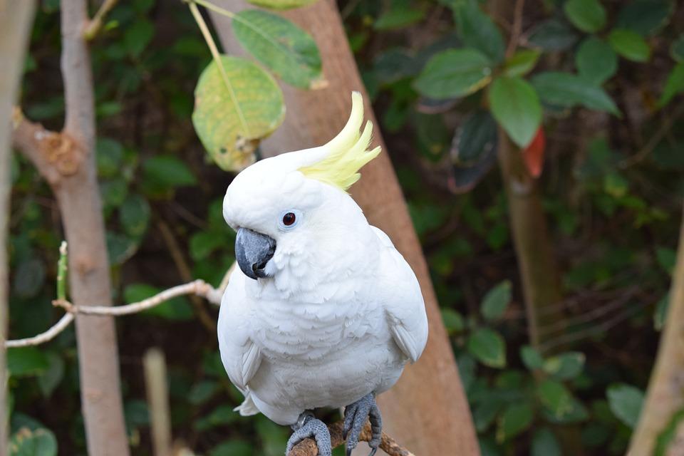 Φωτογραφίες από λευκό πουλί λίπος υγρό μουνί πορνό φωτογραφίες