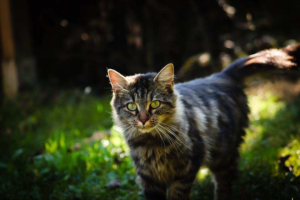 45ad29ffb25d Γάτα Κατοικίδιο Ζώο Γατάκι - Δωρεάν φωτογραφία στο Pixabay