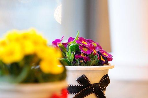 鲜花, 盆栽的植物, 春天, 季节性, 道具, 饰品, 内部, 附件, 季节