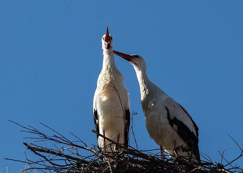 Μεγάλο πουλί λευκό κορίτσι
