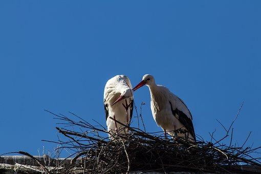 λευκό αγόρι με ένα μεγάλο πουλί σέξι μαύρο έφηβος λεία