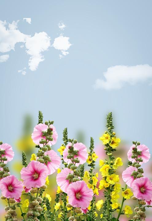 Fiori Primavera Sfondo Foto Gratis Su Pixabay