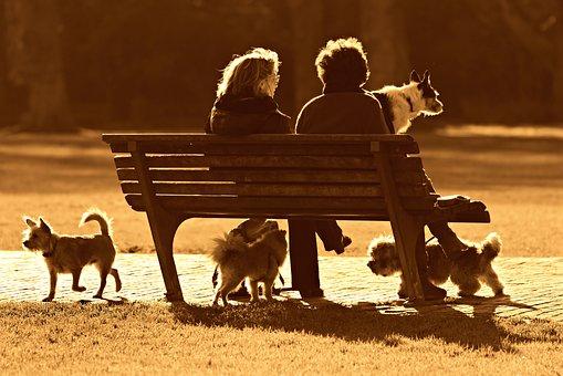 人, 女性, 座っている, 2, 一緒に, ベンチ, 一体感, お友達と, 犬