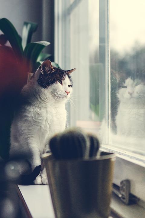 Παράθυρο Γάτα Ζώα Το Περβάζι Του - Δωρεάν φωτογραφία στο Pixabay
