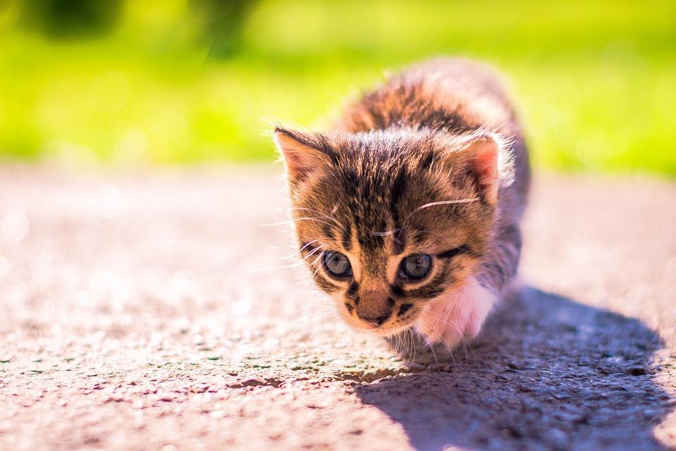 Malé kočička fotky