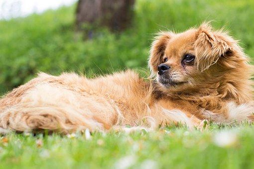 Pet, Dog, Puppy, Animal, Friendship