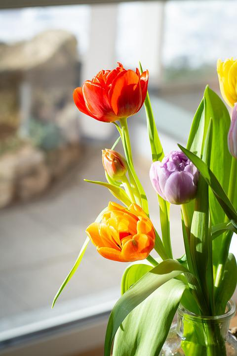 Bunga Tulip Warna Warni Foto Gratis Di Pixabay