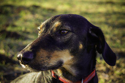 Dog, Animal, Cute, Pet, Snout, Friend