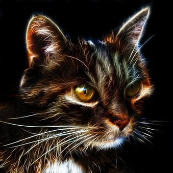 Cat, Fractalius, Profile Picture