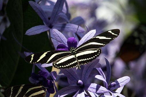 Pillangó, Rovar, Állati, Állatvilág - krónika