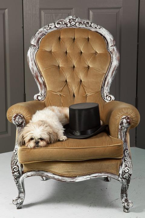 Pixabay Hund Kostenloses Foto Stuhl Zylinder auf 29DWEHI
