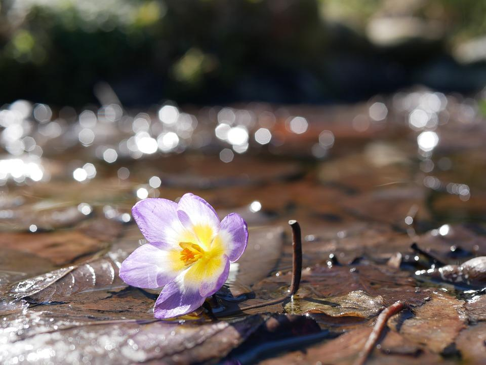 Primavera Flores Flor Plano De - Foto gratuita no Pixabay