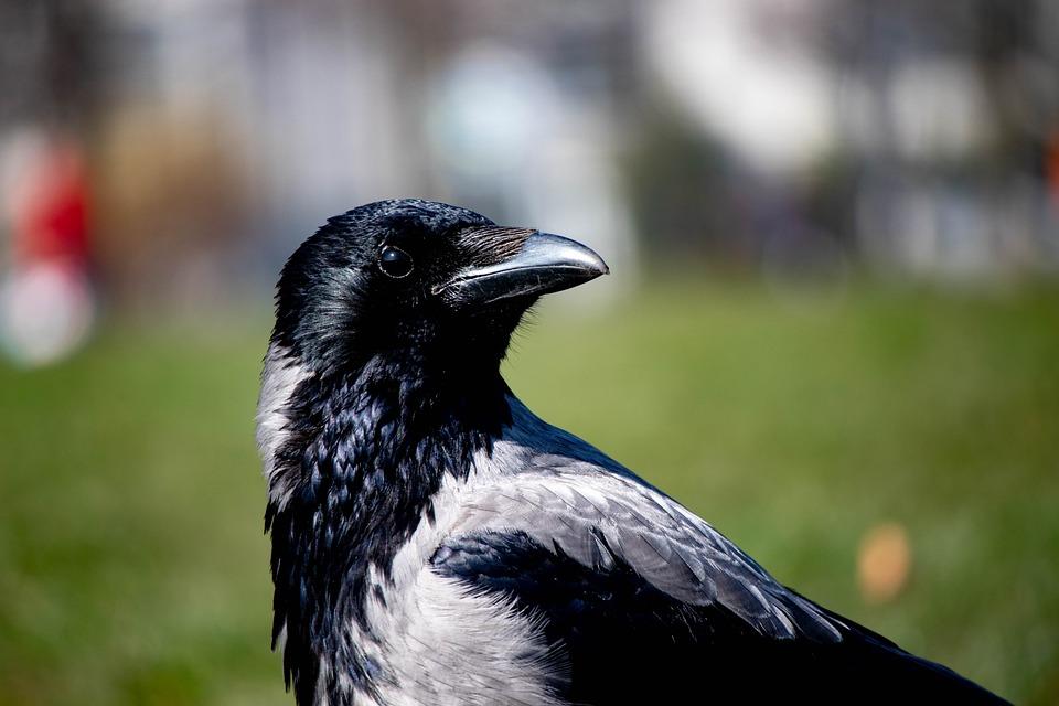 obrázky čiernej veľké vtákyalfa porno lesbičky
