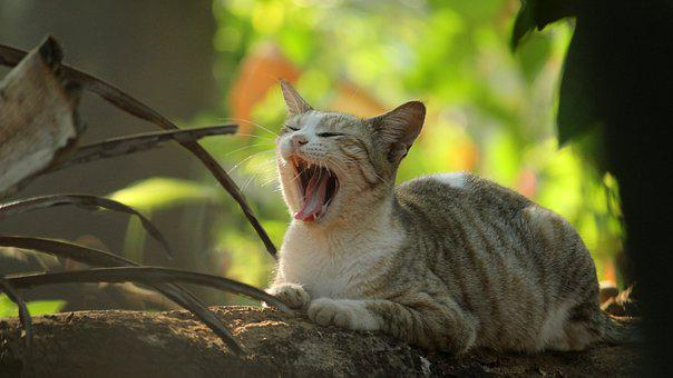 Kerala, India, Cat, Animal, Cute, Nature