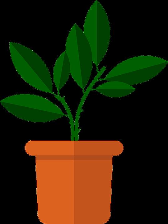 Fleur, Vase, Fleurs, Décoration, Flore, Intérieur, Deco