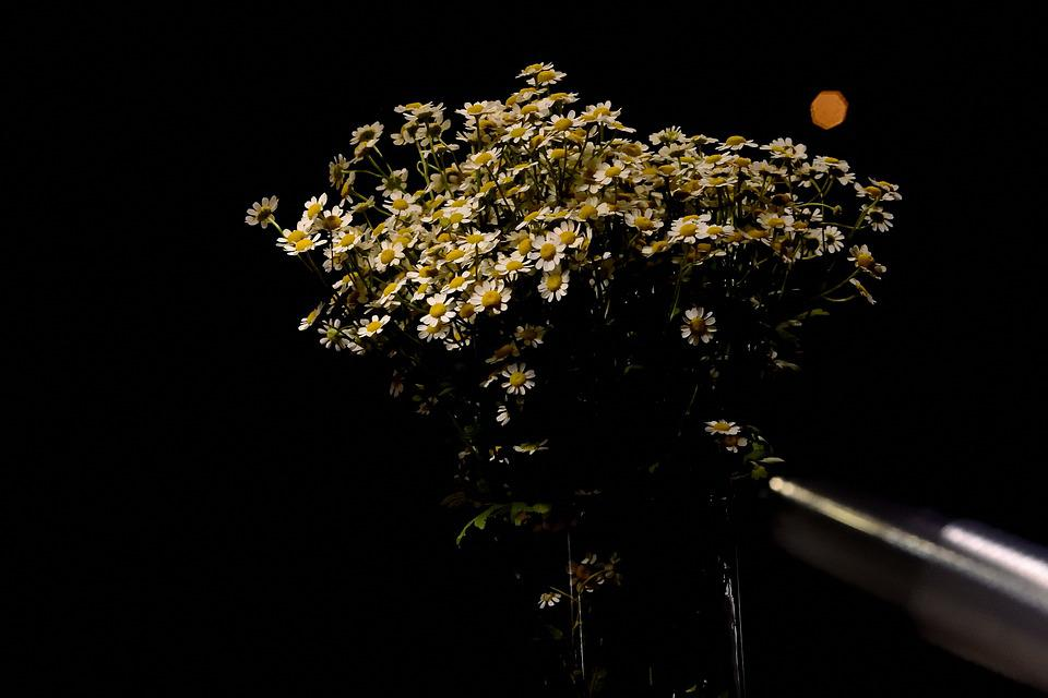 Bunga Bokeh Mewarnai Foto Gratis Di Pixabay