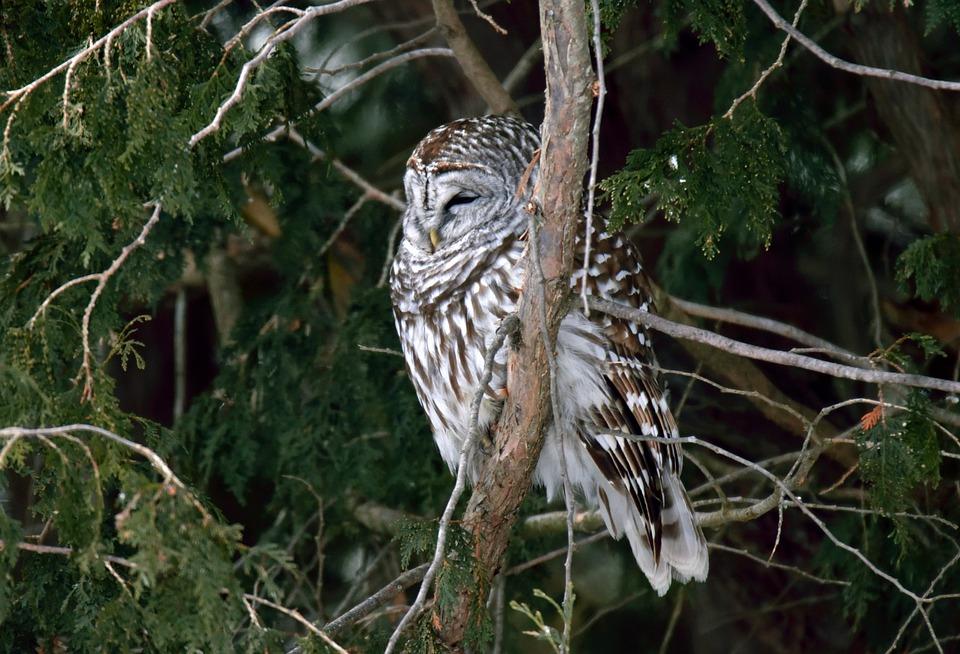 7a1293573 Pták Sova Vyloučen - Fotografie zdarma na Pixabay
