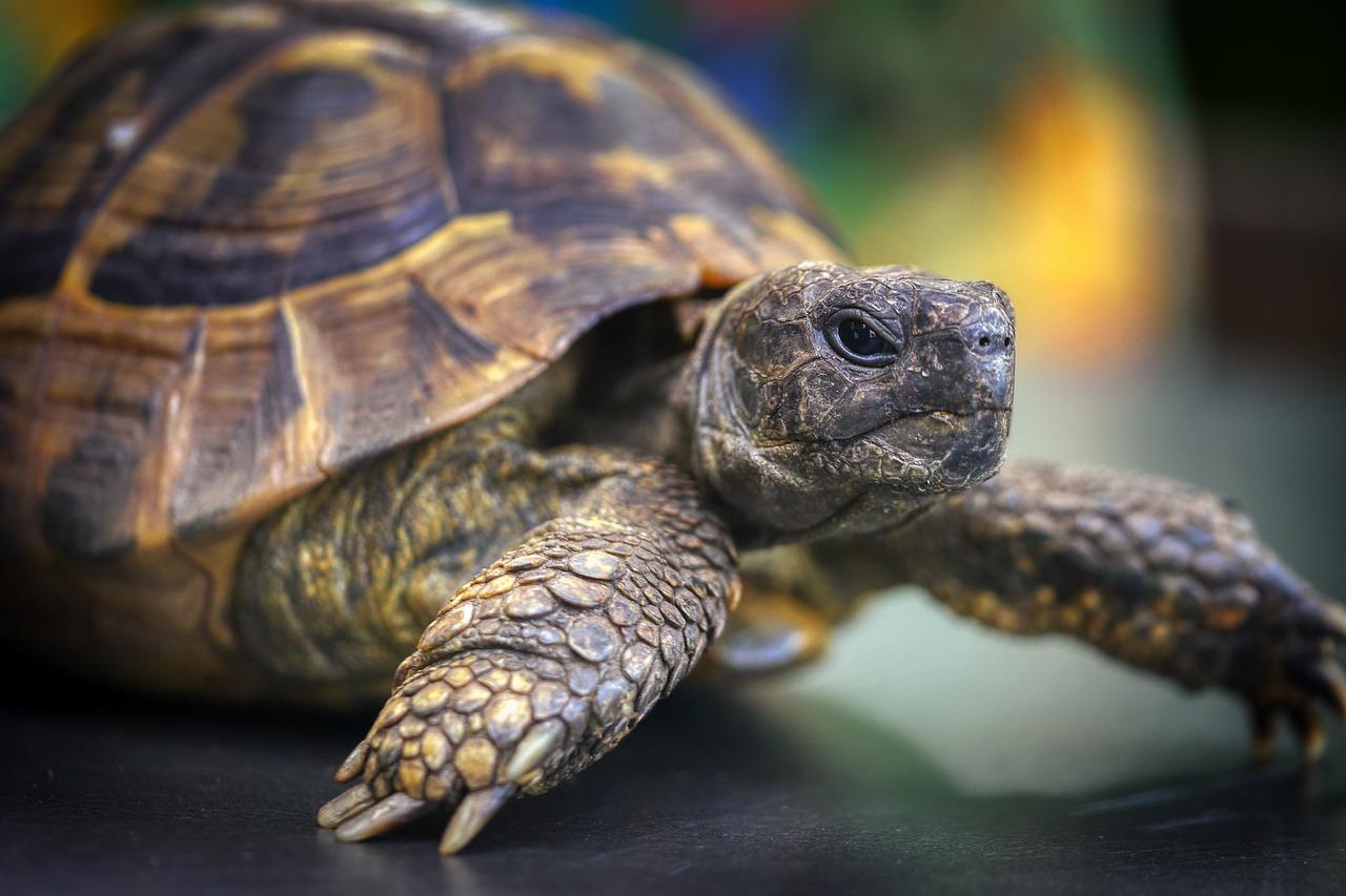 называем актеров, профессиональное фото с черепахами времена были трусы