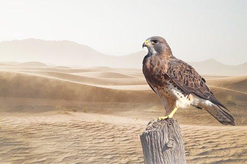 Desierto, Aves, Rapaces, La Naturaleza