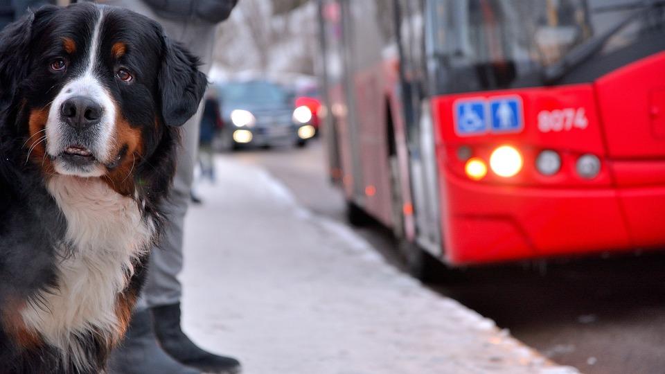 Dog, Bus, Animal, Cute, Pet, Street, Bus Stop