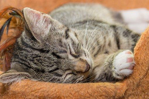 1000 Gambar Kucing Tidur Kucing Gratis Pixabay