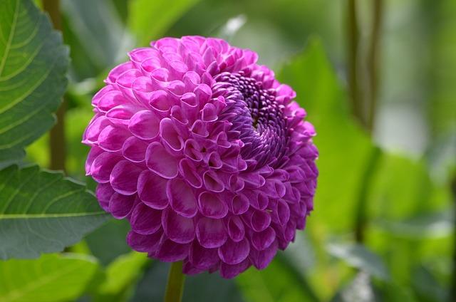 Flower Purple u003cbu003eNatureu003c/bu003e - Free photo on Pixabay