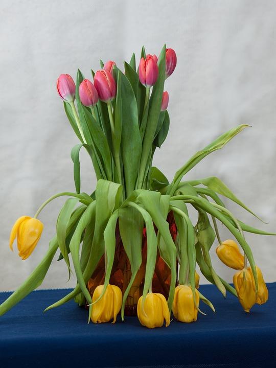 95+ Gambar Lukisan Bunga Tulip Mekar Terlihat Keren