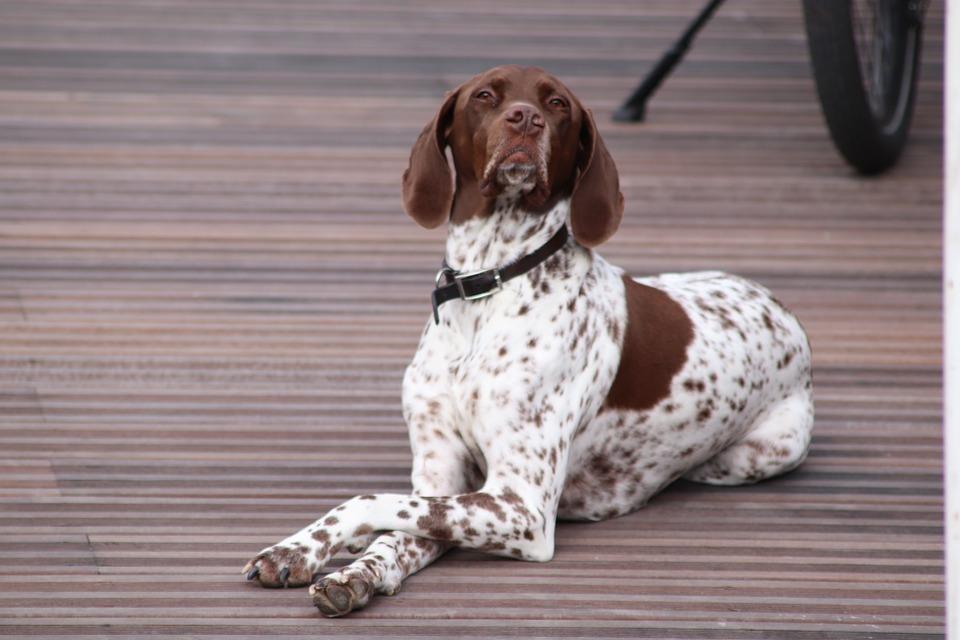 Hund Lustig Haltung Kostenloses Foto Auf Pixabay