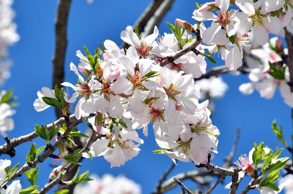 Aquí está la primavera