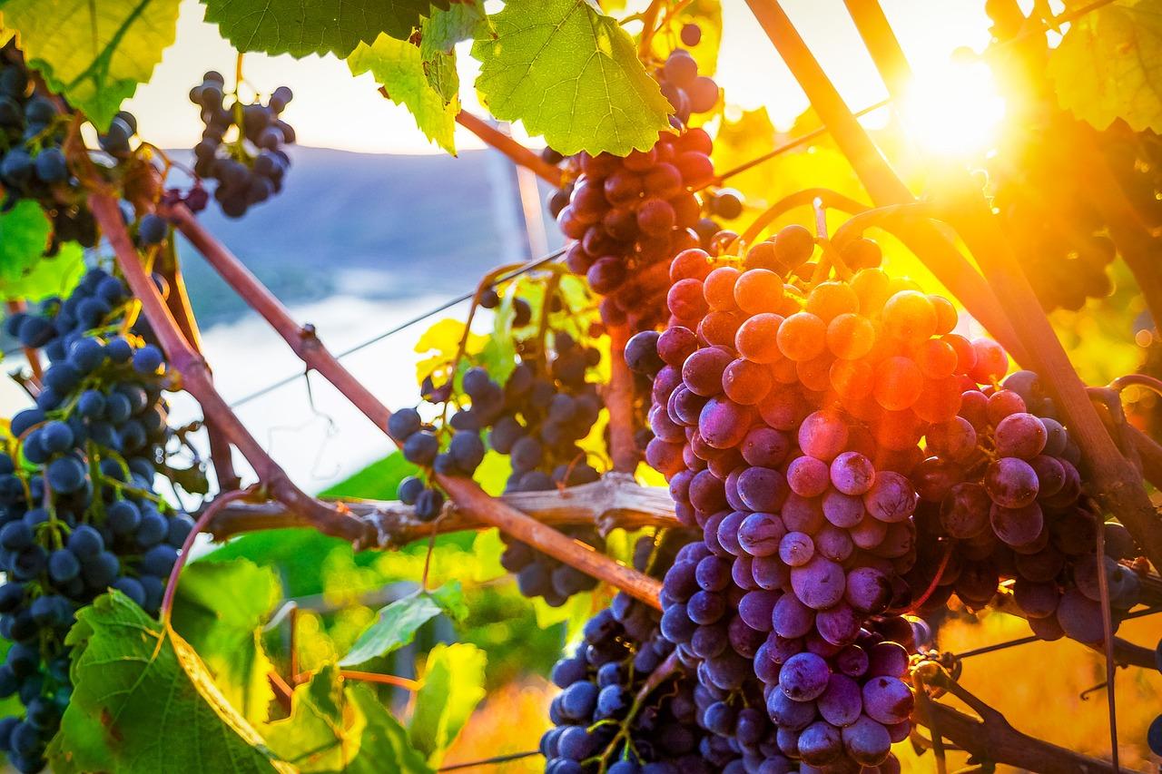 первым красивые картинки виноградной лозы нитками также просто