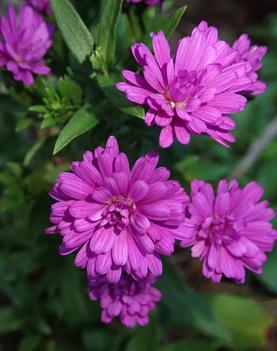 Marguerites Fleurs Automne - Photo gratuite sur Pixabay