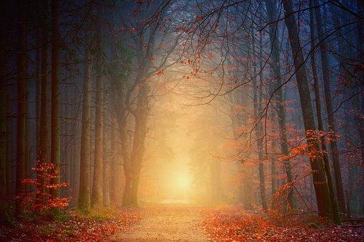 Away, Des Forêts, Route, Automne
