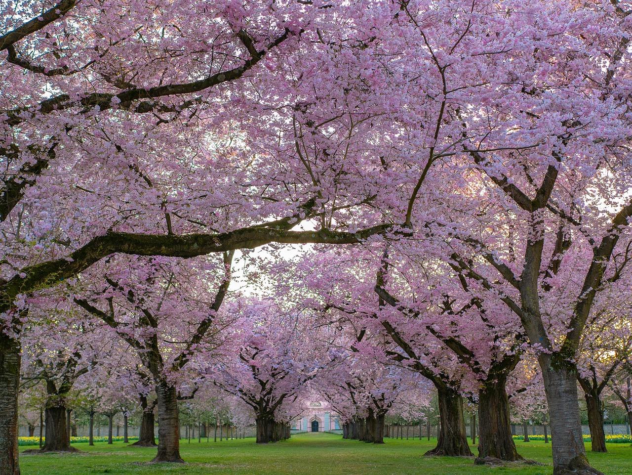 今さら聞けない『桜を見る会』ってなに?