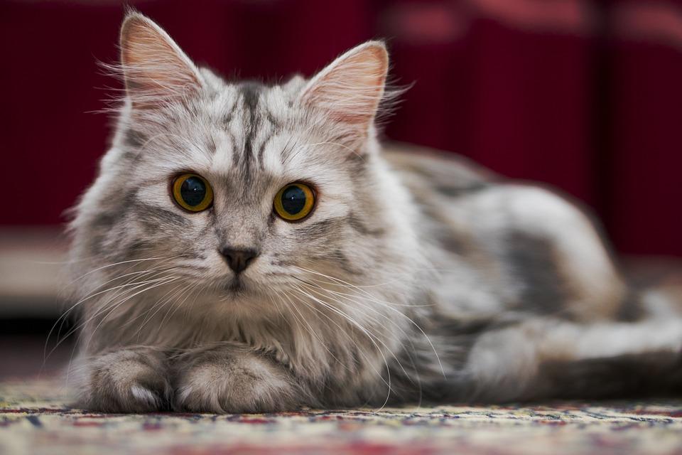 3ee92bedd33d Γάτα Kitty Κατοικίδιο Ζώο - Δωρεάν φωτογραφία στο Pixabay
