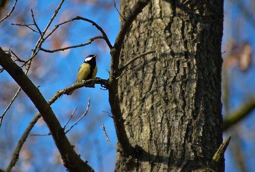 Veľký čierne prsia biele vtáky