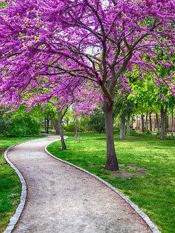 ACOMPAÑEMOS A EDITH EN SU DOLOR Spring-4093325__340