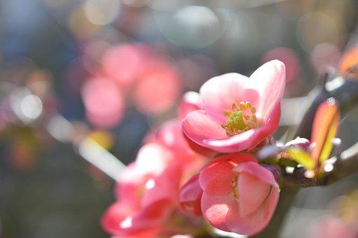 椿の花言葉とは? 色ごとに違う椿の花言葉&ちょっと怖い裏花言葉