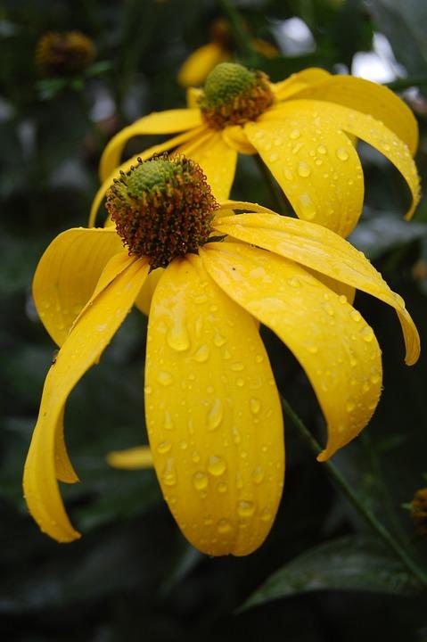 Fiori Giallo Oro.Fiore Giallo Oro Foto Gratis Su Pixabay