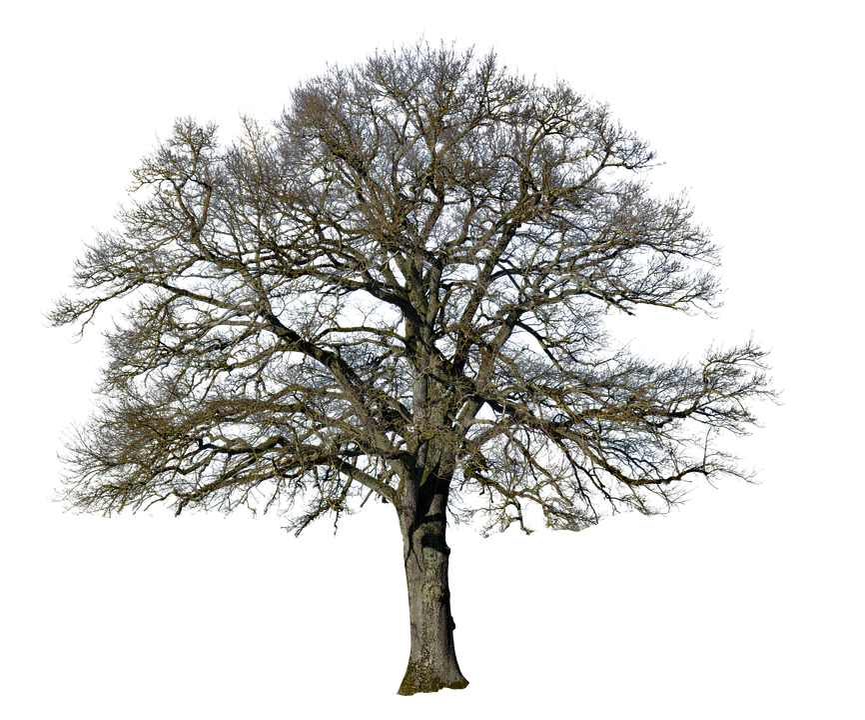 анимация деревья без листьев