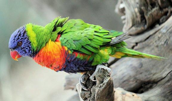 Burung Beo Gambar Unduh Gambar Gambar Gratis Pixabay