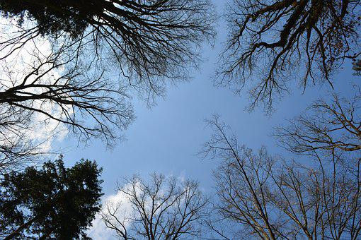 Forest, Trees, Sky, Canopy, Leaves